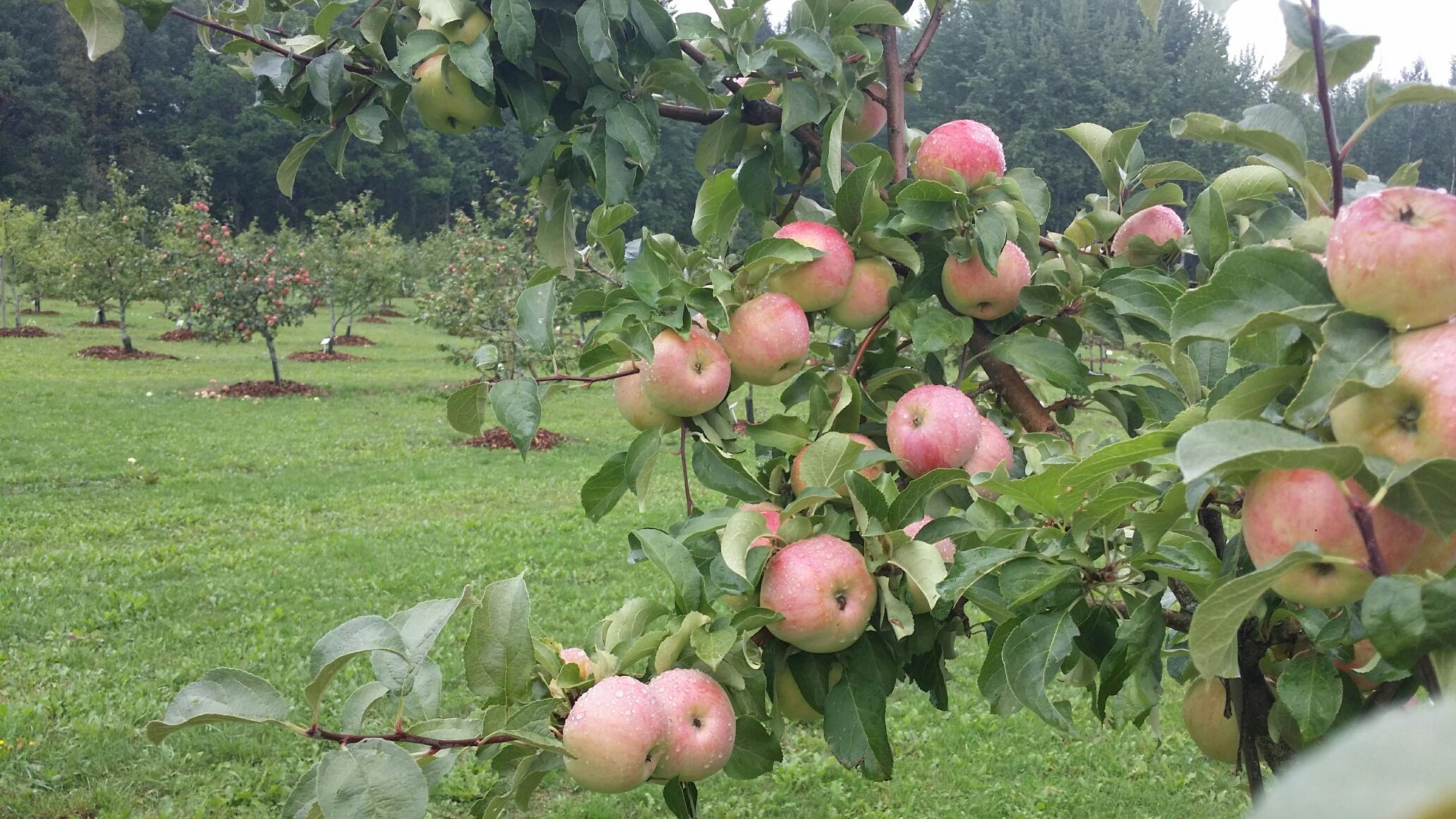 Fruticerum 4jpg
